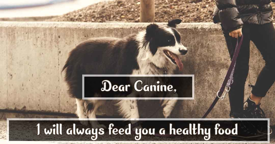 Dear canine i always feed you a healthy food