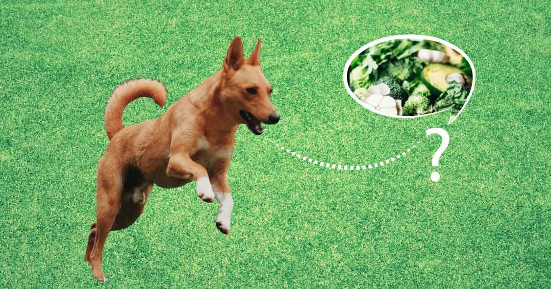 Do vegetables easily digestible for dogs?