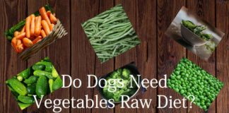 do dogs need vegetable raw diet
