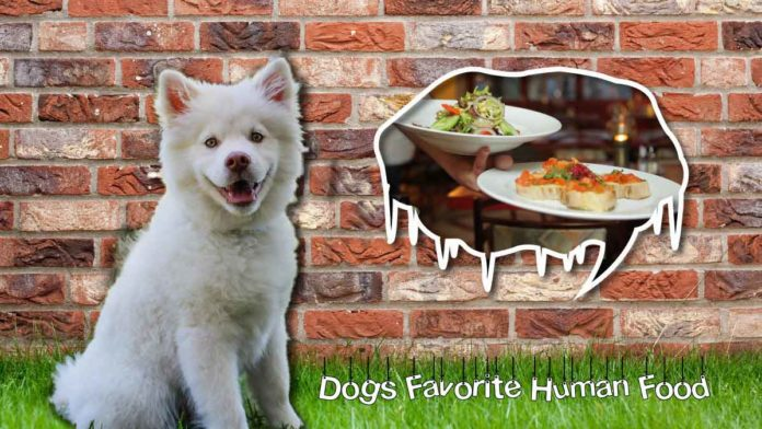 dogs favorite human food