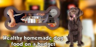 healthy homemade dog food on a budget