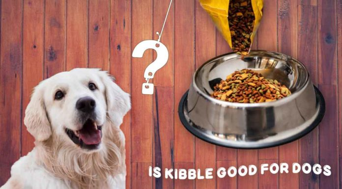 is kibble good for dogs