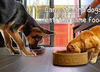 Can cats and dogs eat the same food?