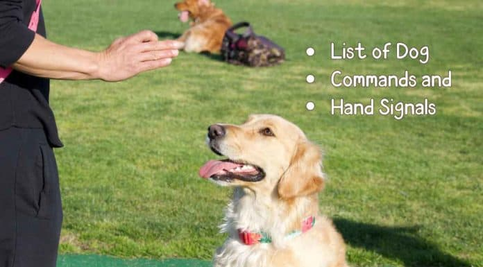 list of dog commands and hand signals