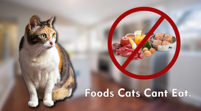 Foods cats cant eat