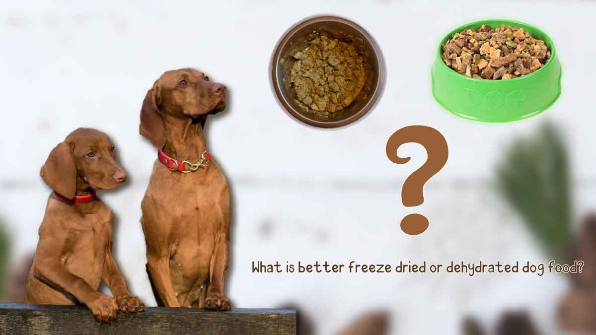 What is better freeze-dried or dehydrated dog food?