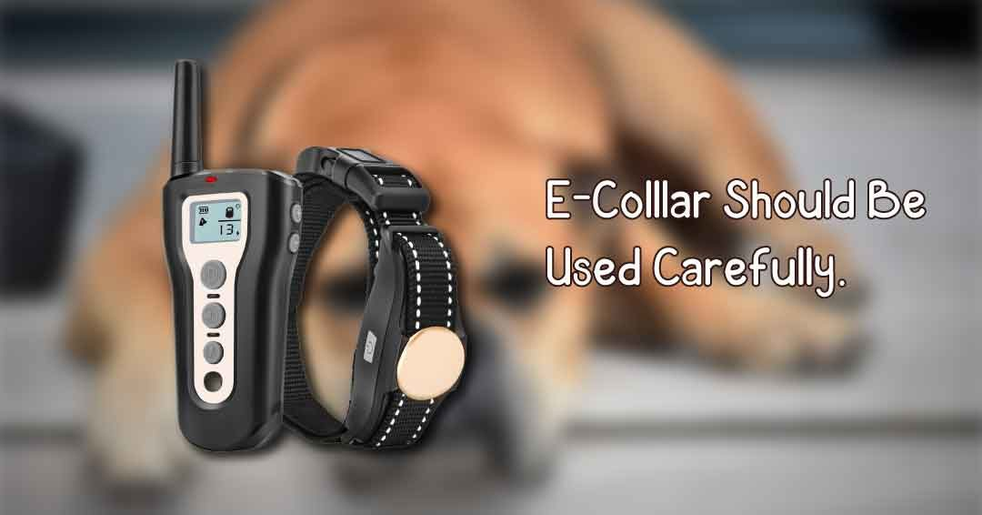 E Collar should be used carefully