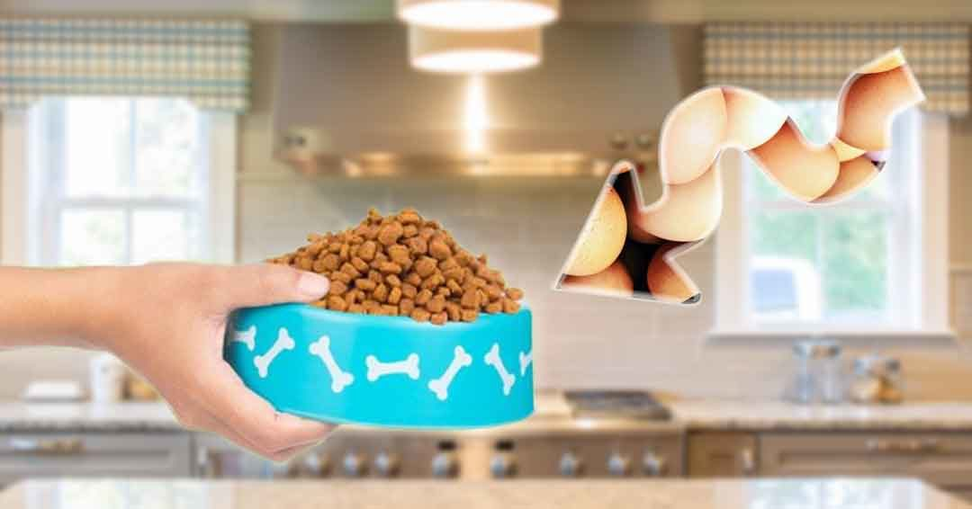 adding eggs into kibble