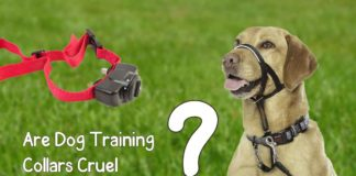 are dog training collars cruel