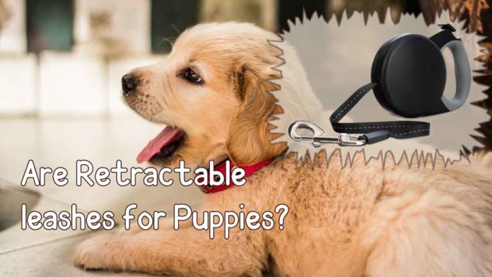 are retractable leashes good for puppies