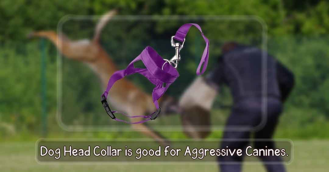 dog head collar is good for aggressive  canines