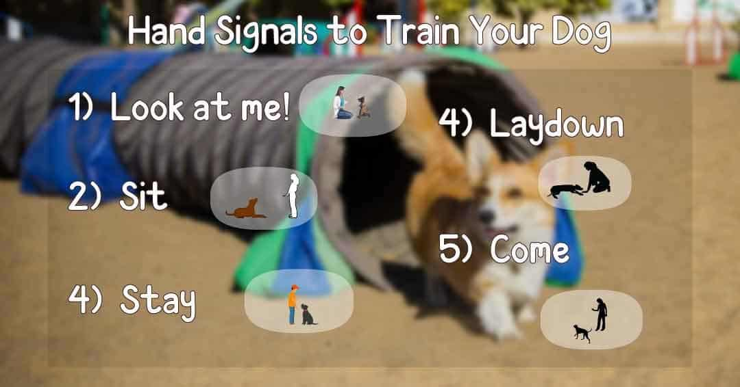 hand signals to train your dog