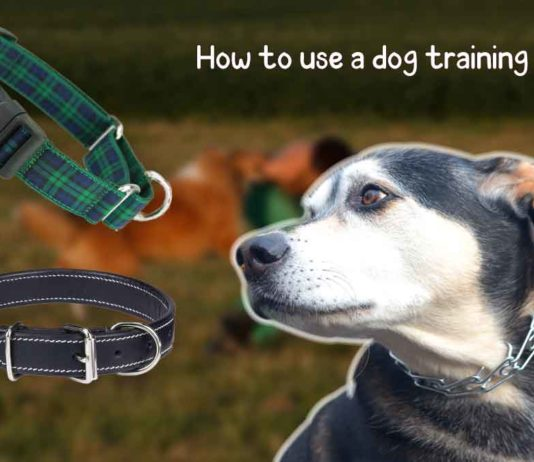 how to use a dog training collar?