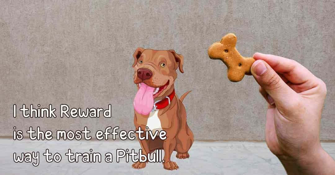 most effective way to train a pitbull