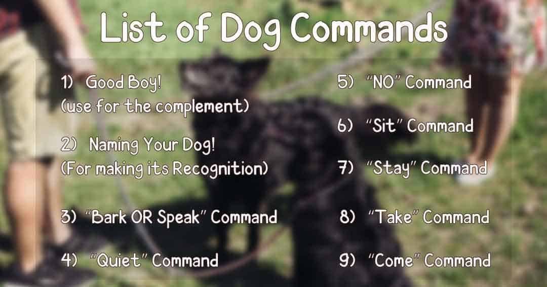 list of dog commands