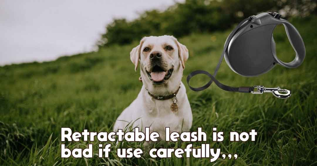retractable leash is not bad if use carefully