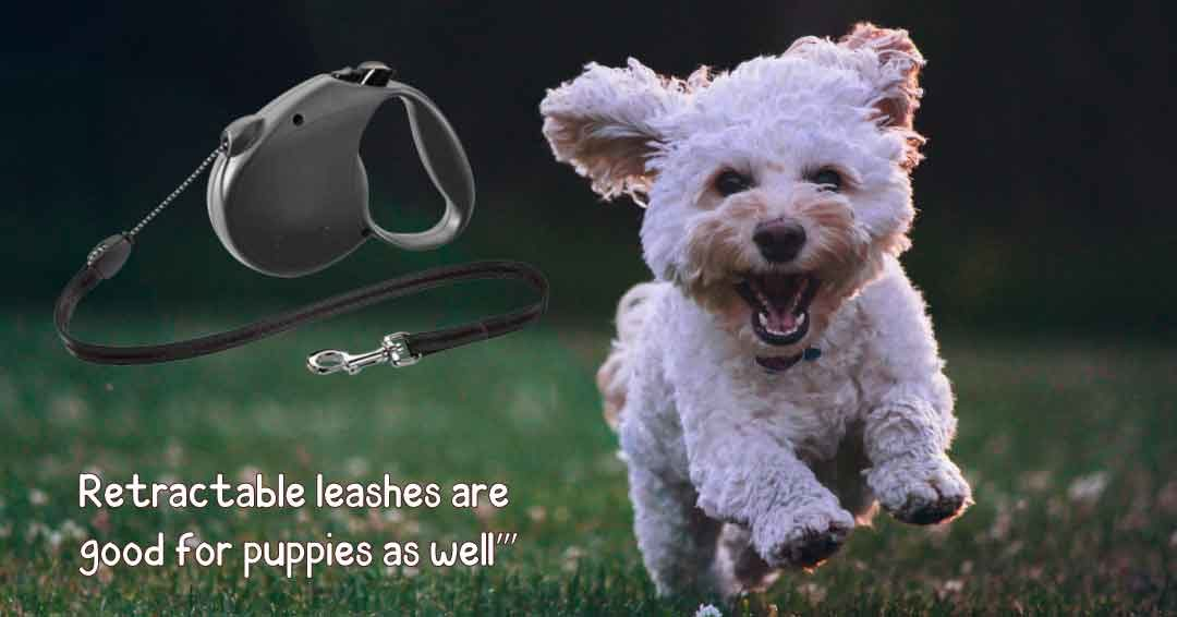 retractable lashes are good for puppies as well