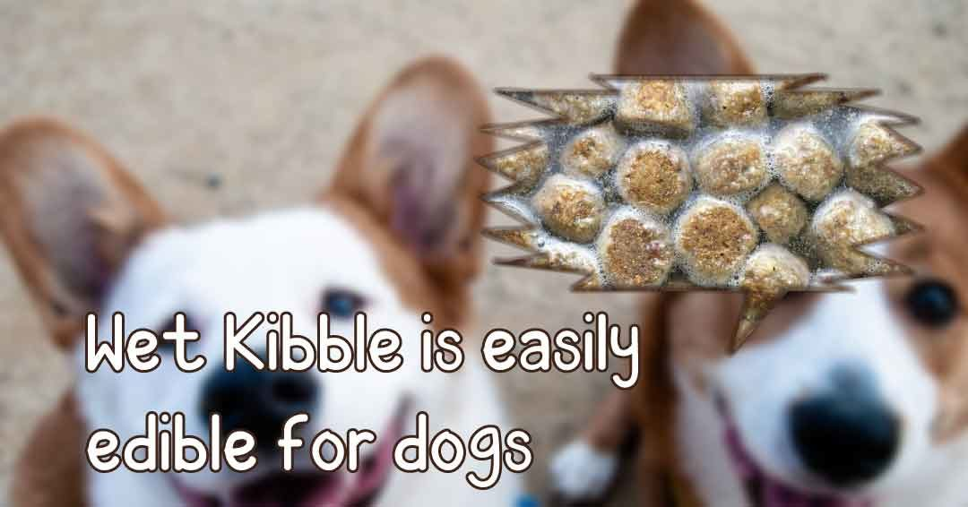 wet kibble is easily edible for dogs