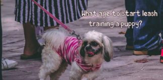 what age to start leash training a puppy?