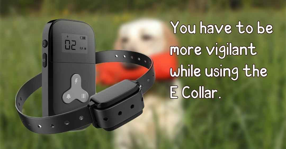 you have to be more vigilant while using E collar