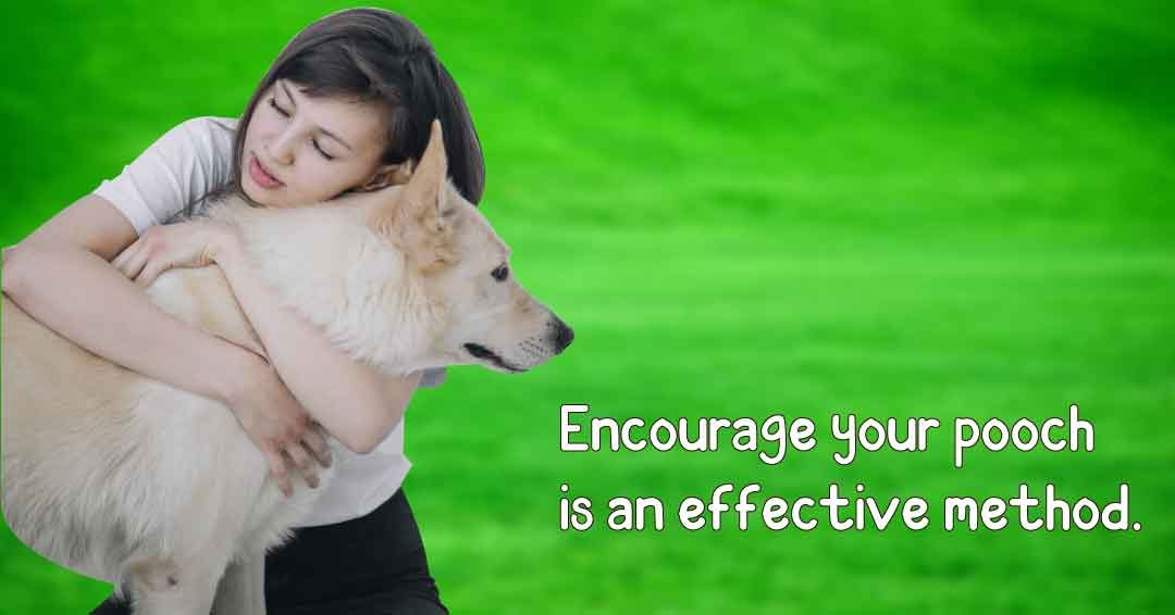 Encourage your pooch is an effective method