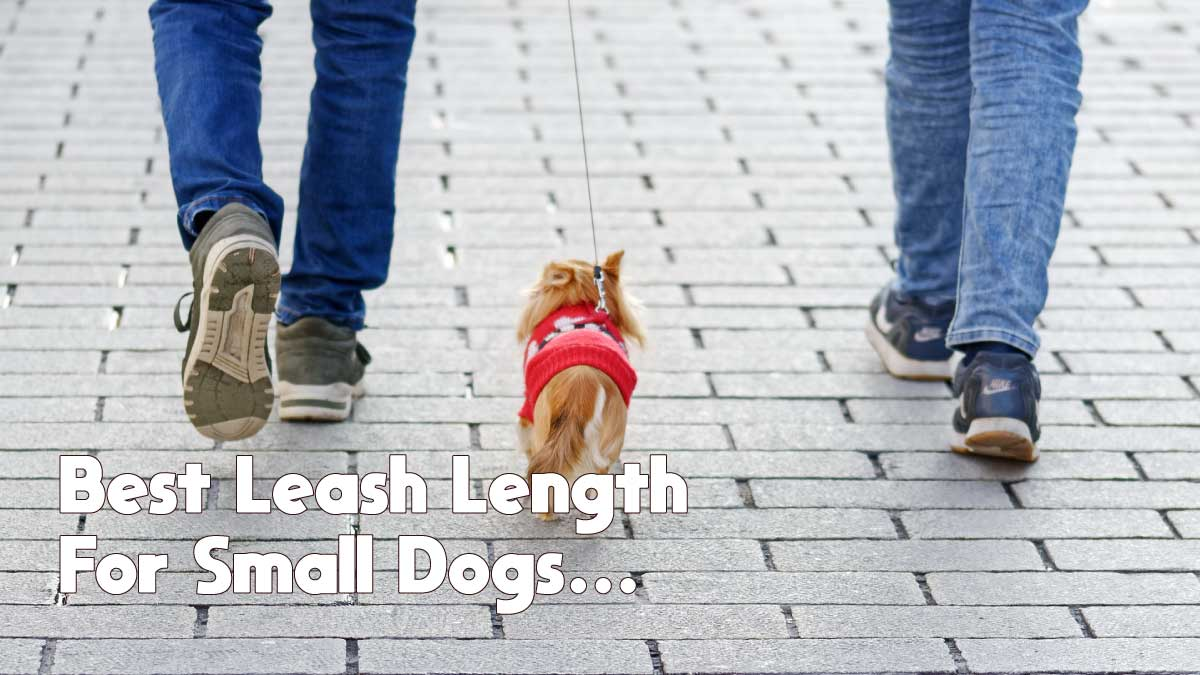 best leash length for small dogs