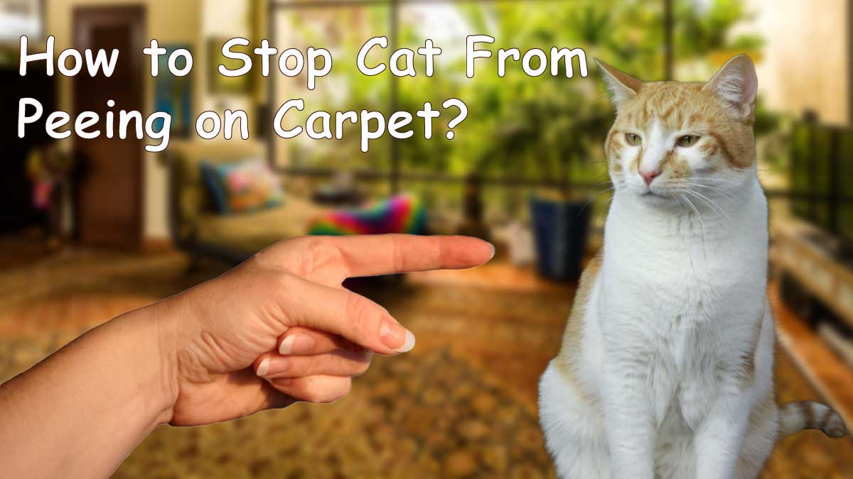 how to stop a cat from peeing on carpet