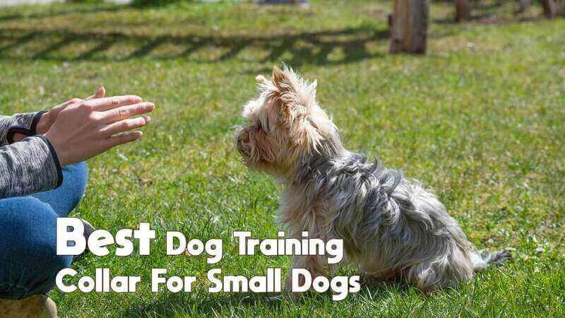 best dog training collar for small dogs