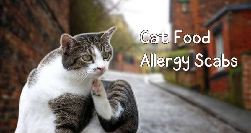 Cat Food Allergy Scabs