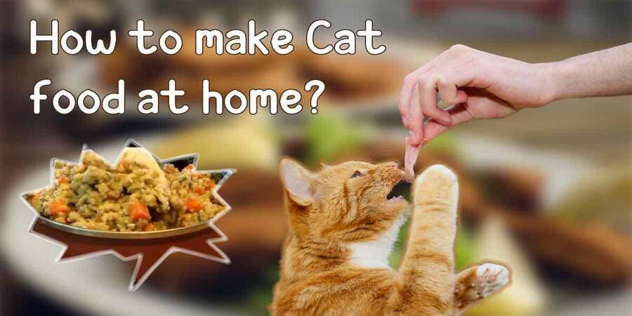 how to make cat food at home