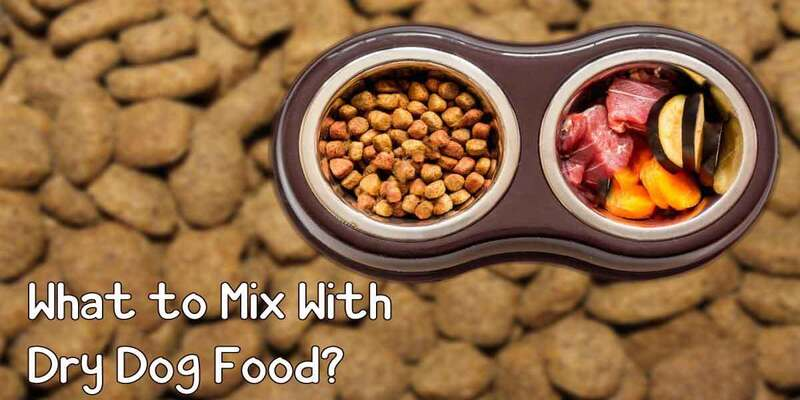 What to mix with dry dog food?