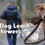 best dog leash for chewers