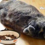 best weight control cat food