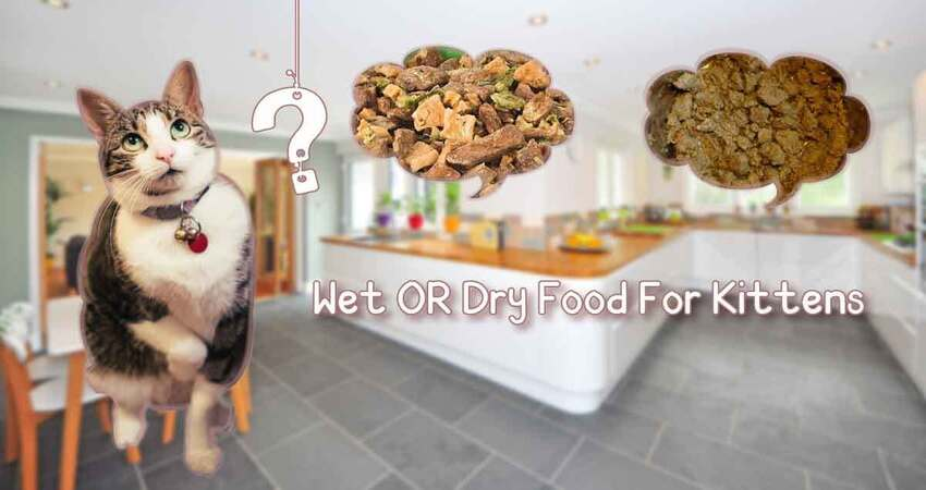 wet or dry food for kittens?