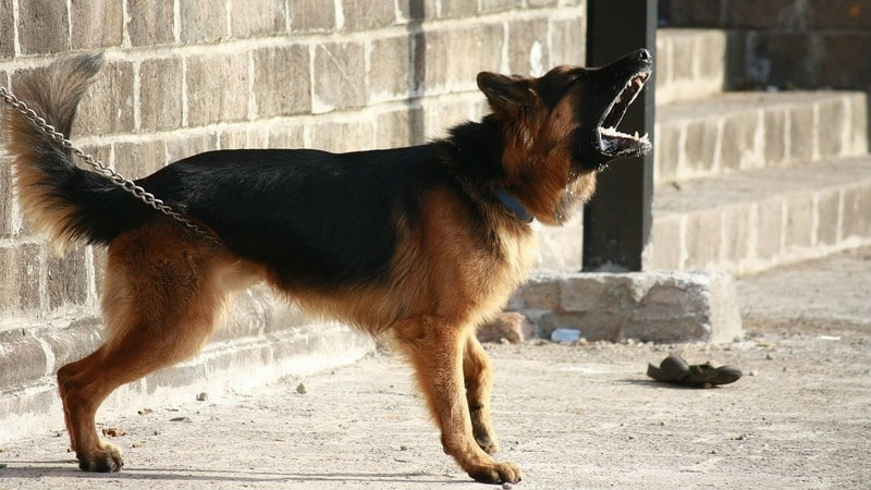 how to train an aggressive dog with a shock collar